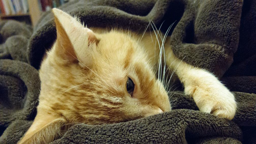 Bélelzáródásos cica