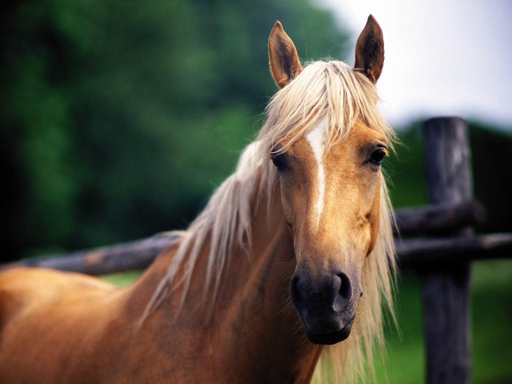 Ló jelöléssel kapcsolatos szolgáltatások